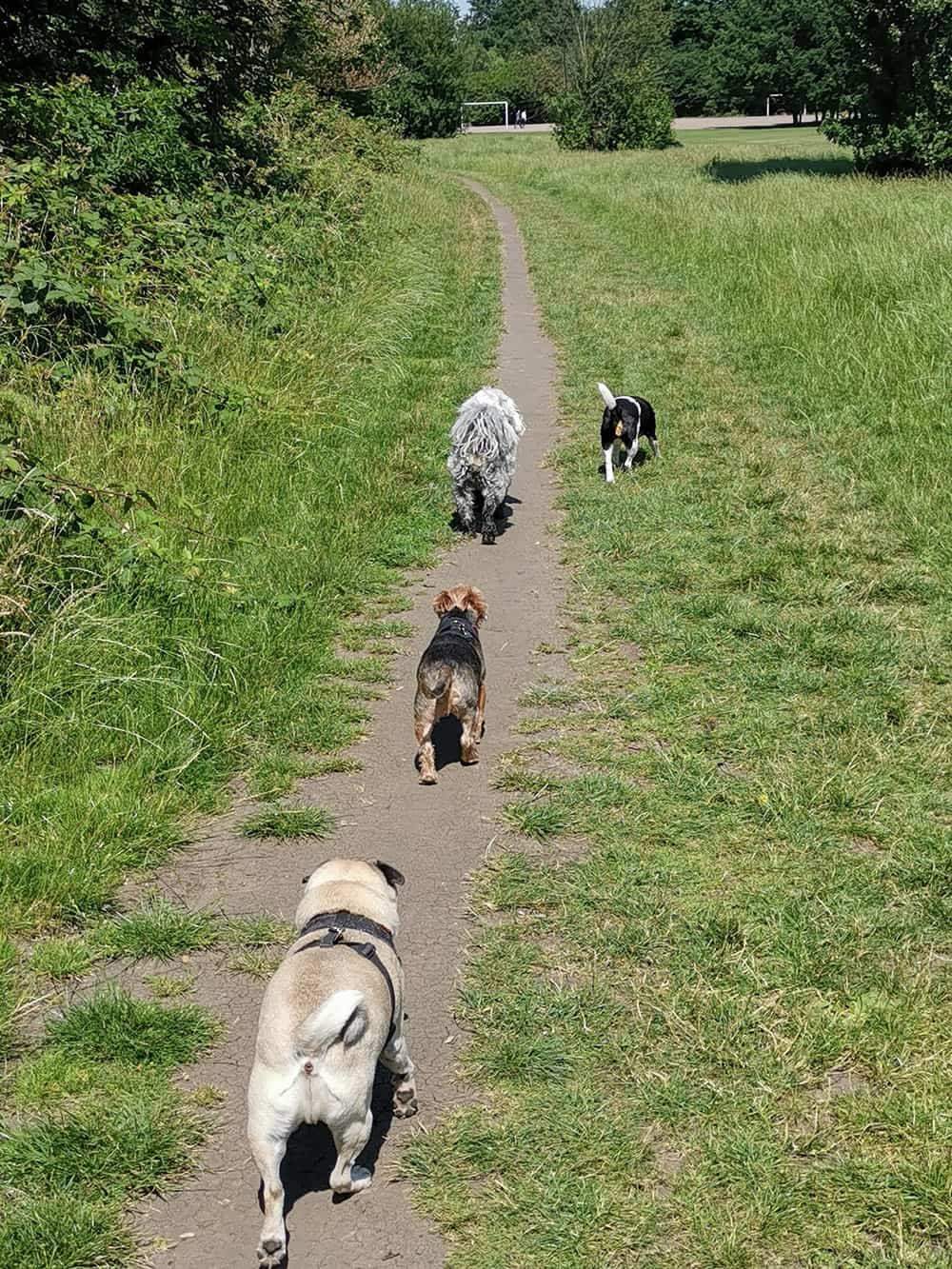 dog daycare wandsworth common chelsea wags
