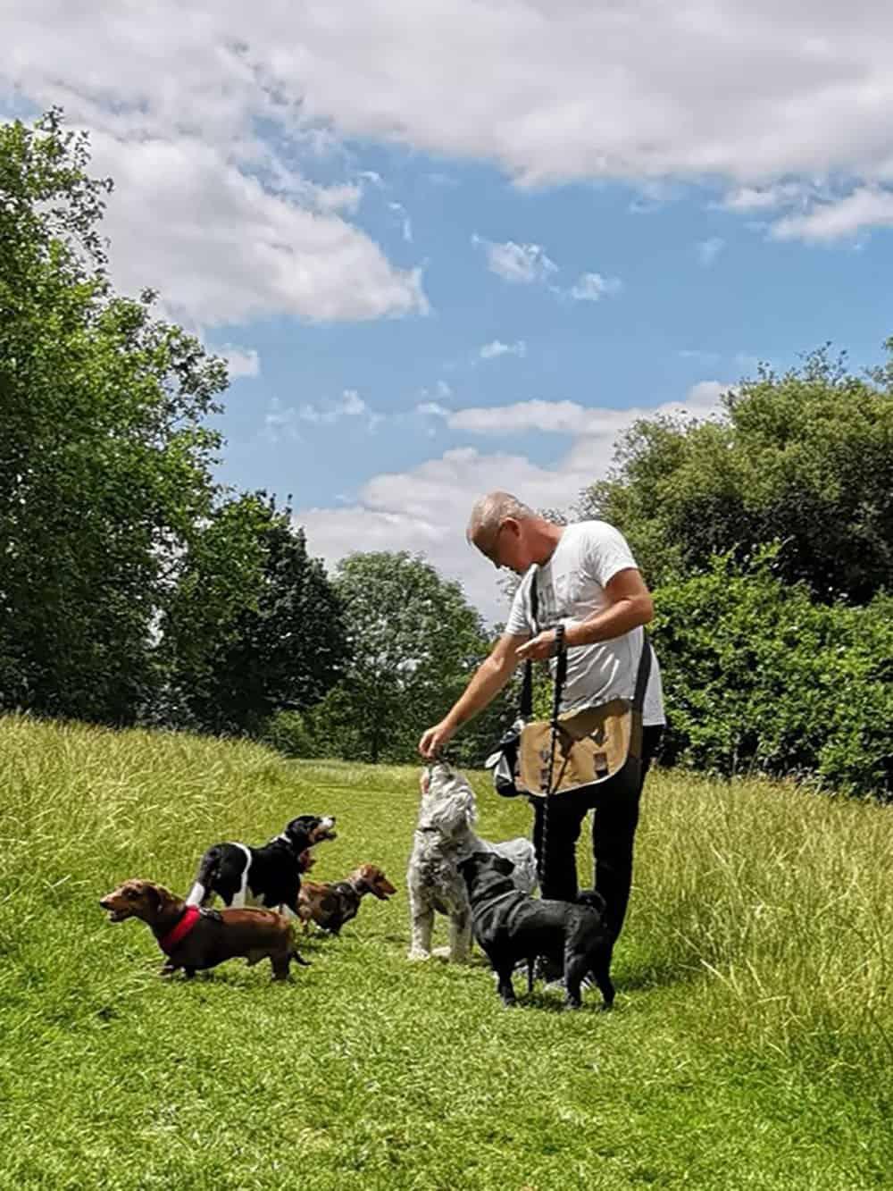 nik dewey chelsea wags dog walking wandsworth common sunny day